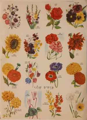 Vintage israeli poster kids Flower names